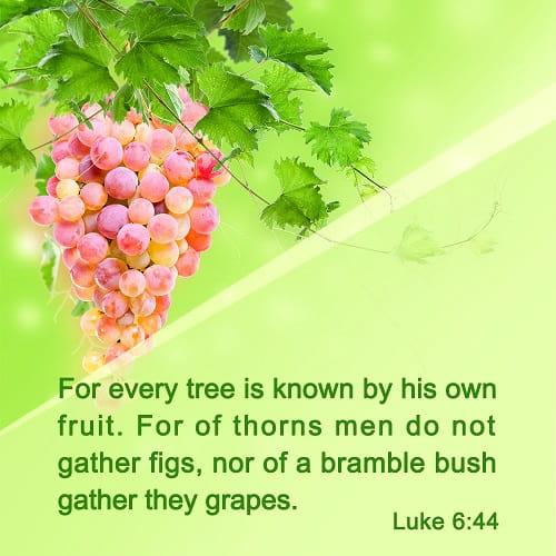 Bible Verse – Luke 6-44