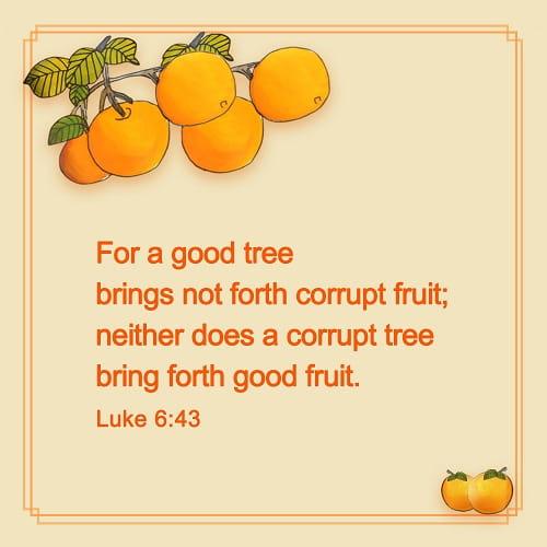 Bible Verse –Luke 6-43