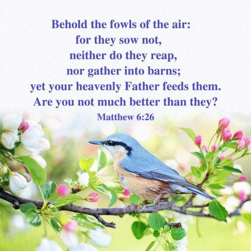 Bible Verse – Matthew 6:26