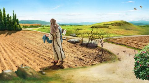 Inspiration From the Parable of the Sower in the Bible