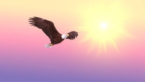 What Does the Story of Eagles' Growth Teach us About Difficulties?