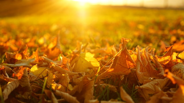 Fallen leaves under the sun