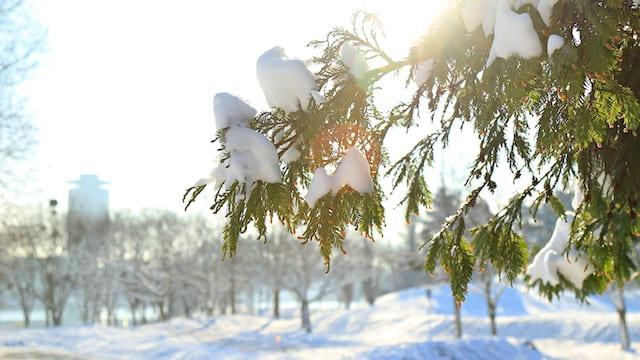 Cedar under the sun, how to face trails from God