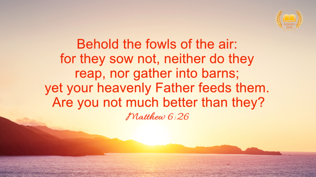 "Matthew 6:26 ""Behold the fowls of the air: for they sow not, neither do they reap, nor gather into barns; yet your heavenly Father feeds them. Are you not much better than they?"""