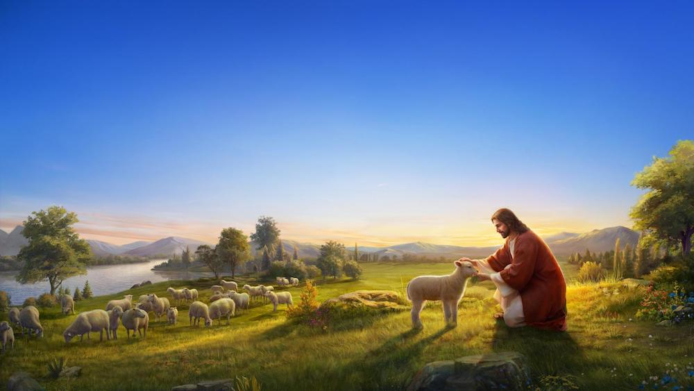 parable of the lost sheep reflection
