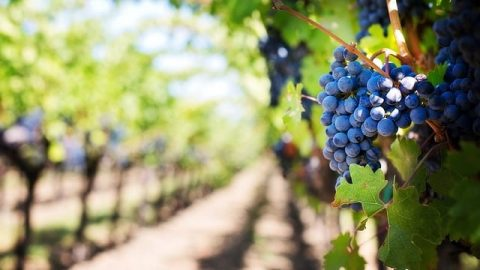 The Profound Meaning Behind the Parable of the Vineyard