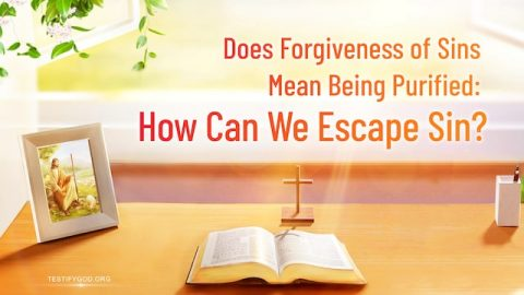 Does Forgiveness of Sins Mean Being Purified How Can We Escape Sin