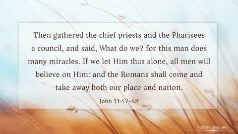 The Pharisees Discussed Framing the Lord Jesus – Gospel Reflection on John 11:47-48