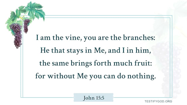 John 15:5, I am the vine, you are the branches, Gospel Reflection