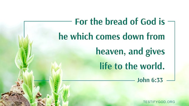 Reflection on John 6:33